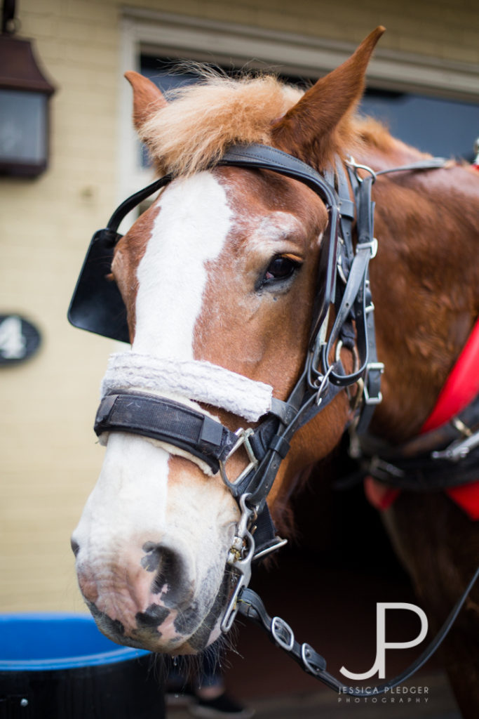 Charleston Travel Guide Carriage Ride